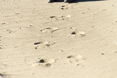 footprints Fotografia Royalty Free