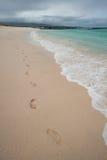Footprints along beautiful beach shore, Galapagos Royalty Free Stock Images