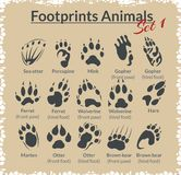 Footprints Animals - vector set. Royalty Free Stock Photography