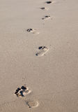 Footprints on a beach Royalty Free Stock Images