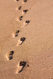 Footprints on the beach. A row of foot prints on the beach leading away from the viewer Royalty Free Stock Photo