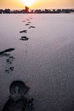 The footprints on the beach Royalty Free Stock Photography