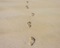 Footprints on the beach. Looking for the way Stock Photography