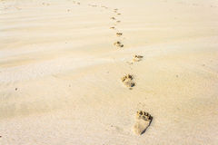 Footprints on the beach. Looking for the way Royalty Free Stock Photos