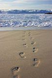 Footprints. On the beach near the ocean Stock Photography