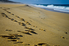 Footprints on the beach, Portugal Stock Image