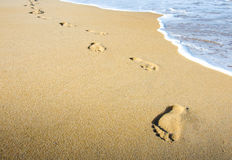 Footprints in the beach. Scenic with water and footprints at a beautiful beach Royalty Free Stock Photography
