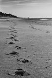 Footprints on the beach. A trail of footprints fades into view on a beach in the morning. This photograph was taken in Surf City, North Carolina Stock Photography