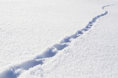 Footprints of the beast in the fresh snow.  Stock Photography