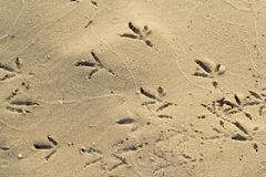 Footprints of birds on sand Stock Photos