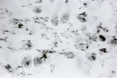 Footprints of birds on the snow.  Stock Photography