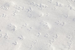 Footprints of birds in the snow Royalty Free Stock Images