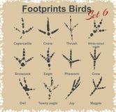 Footprints Birds - vector set Stock Photo