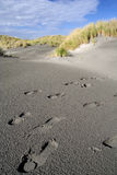 Footprints in the black desert. Footprints on a black beach of New Zealand Royalty Free Stock Photo