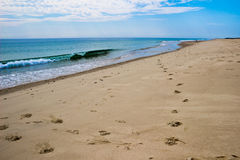 Footprints on a Cape Cod Beach Royalty Free Stock Photo