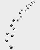Footprints of cat Stock Images