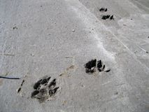 Footprints in cement. Royalty Free Stock Photography