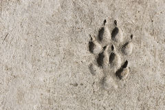 Footprints in concrete Royalty Free Stock Photos