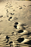 Footprints in desert Royalty Free Stock Images