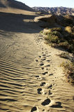 Footprints in desert Royalty Free Stock Image