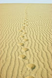 Footprints in the desert Stock Photo