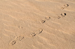 Footprints in desert 2 Stock Photography