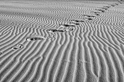 Footprints in the desert Stock Image