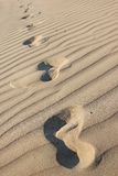 Footprints in a desert Royalty Free Stock Photo