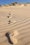 Footprints in a desert Royalty Free Stock Photos