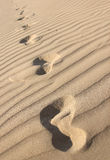 Footprints in a desert Royalty Free Stock Photography