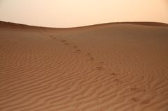 Footprints on a desert dune Royalty Free Stock Photo