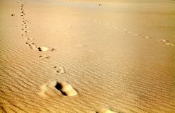 Footprints on the desert Stock Images