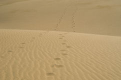 Footprints in the desert Stock Photography