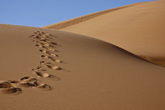Footprints in desert sand. Footprints on desert sand dune with blue sky Stock Images