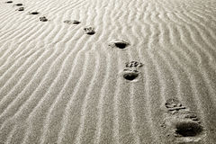 Footprints in the desert sand royalty free stock images