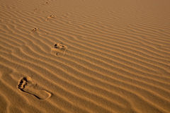 Footprints in desert sand. Closeup. Concept for freedom, summer and vacations Royalty Free Stock Image