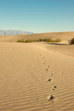 Footprints in Desert Sand Royalty Free Stock Images