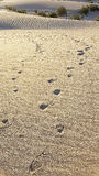 Footprints in Desert Sand Stock Photos