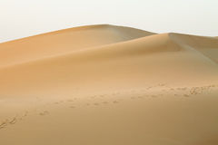 Footprints in the desert Stock Photo