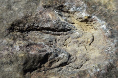 Footprints Dinosaurs Royalty Free Stock Images