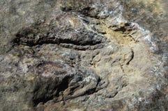 Footprints Dinosaurs. Real dinosaur footprint nature asia Royalty Free Stock Images