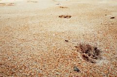 Footprints of dog. Footprints of dog on the beach Stock Images