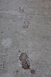 Footprints and dog tracks Royalty Free Stock Image