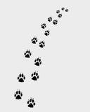 Footprints of dog Royalty Free Stock Image
