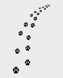 Footprints of dog Royalty Free Stock Photos