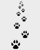Footprints of dogs Stock Image