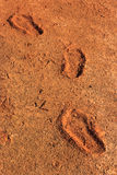Footprints dried in the ground or on the ground.  Stock Photos