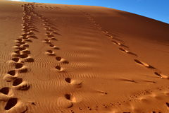 Footprints on dune Stock Photography