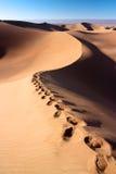 Footprints on dune of Erg Chigaga Royalty Free Stock Image