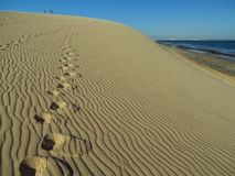 Footprints on dune Royalty Free Stock Photo